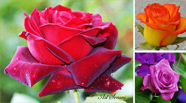 Да се погрижим за розите