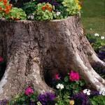 Flower garden in a log
