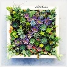 вертикална градина-пано (7)