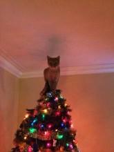 Originelle Weihnachtsbaumideen (11)